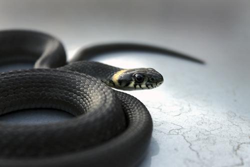蛇 脱走 見つからない 見つけ方