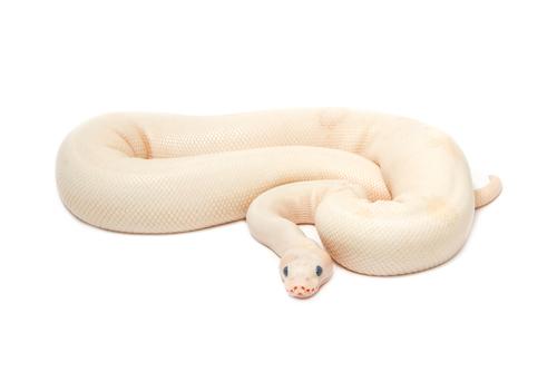 蛇 嫌い 克服