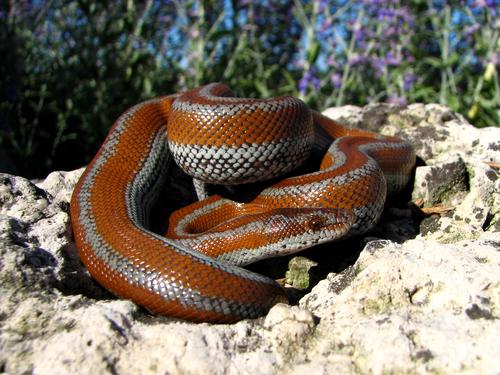 蛇 茶色 夢占い 手