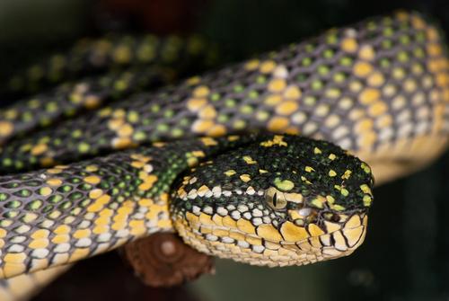 蛇 気温 活動 冬眠