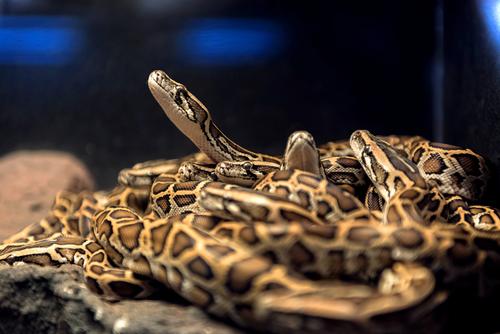 ヘビ 餌 アシスト
