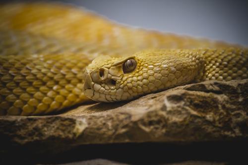 蛇 踏む 縁起