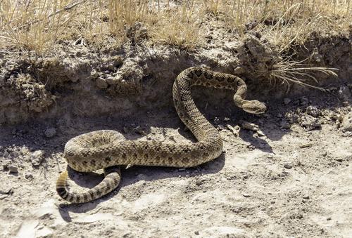 ヘビ 水入れ 出てこない