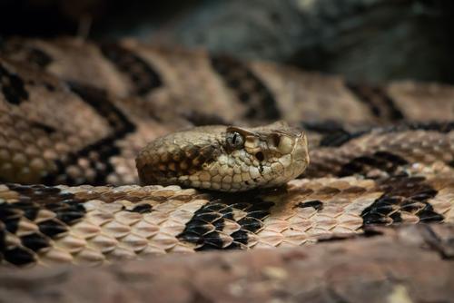 蛇 進 原理 観察
