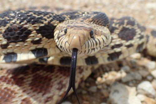 ヘビ マウスロッド 病状