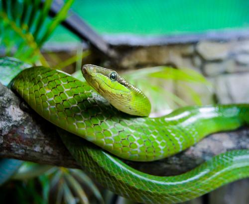 蛇 夏 餌 温度 水