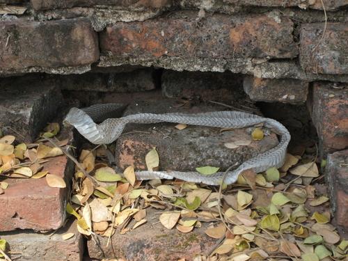 蛇 脱皮不全 温浴