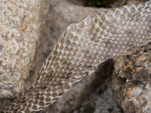 蛇 脱皮 動く 消化 毒 仕方