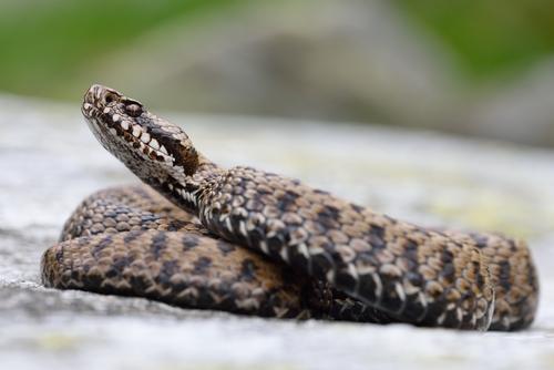 蛇 黒 小さい 日本