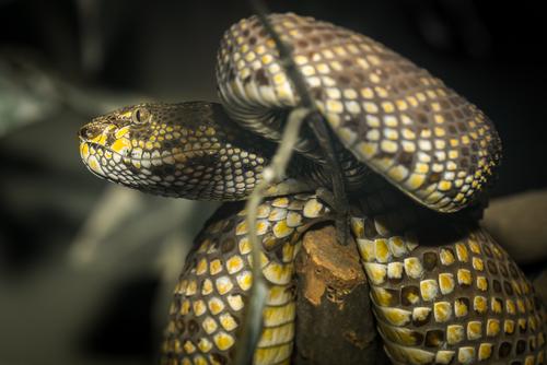 ヘビ 卵 孵化 時期