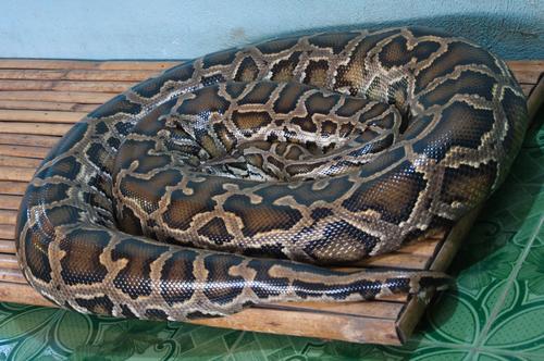 蛇 飼育 冬眠 方法 温度 気温