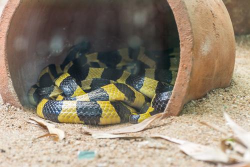 蛇 庭 巣 対策