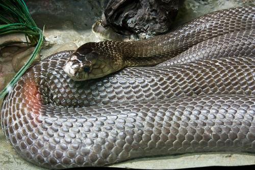 ヘビ 飼う 捕獲 許可