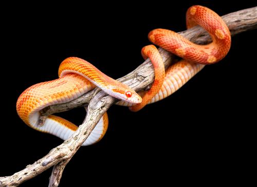 蛇 幸運 知恵 ユング 象徴