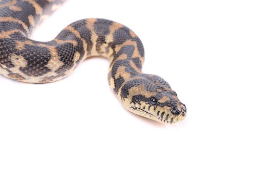 蛇 種類 日本 庭