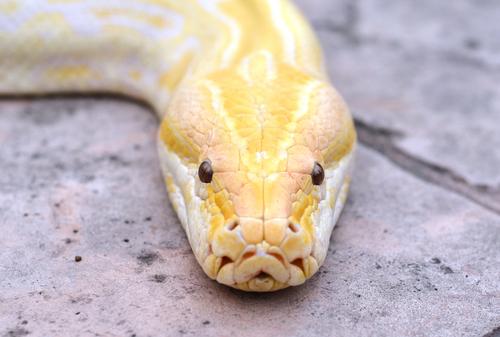蛇 種類 黒 白 ベージュ