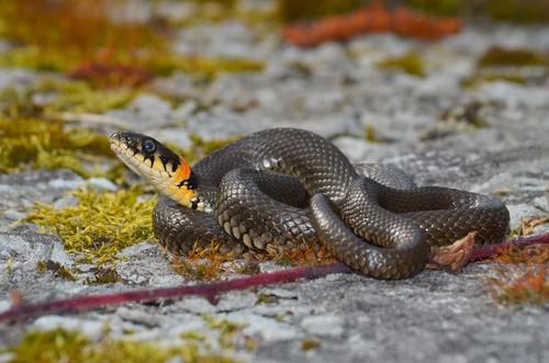 蛇 とぐろ 丸呑み あくび 理由