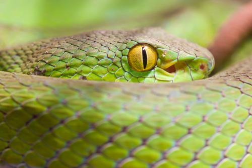 蛇 目 種類 構造 特徴