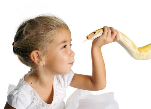 蛇 飼育 簡単 許可 ケース