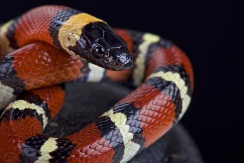 蛇 意味 名前 象徴 漢字 色