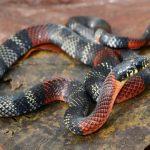 日本にいる茶色の蛇