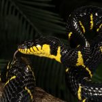 赤い蛇が庭に出現したが、何という種類の蛇でどのように対応したらいいのか?