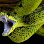 蛇のベビーが餌を食べてくれいない!拒食の理由は?