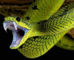 蛇 拒食 理由 ベビー