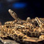 蛇の餌のアシストのやり方
