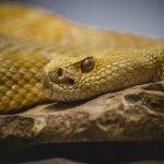 蛇の夢は縁起がいい!そんな縁起のいい蛇を踏む夢にはどんな意味があるの?