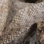蛇の毒は、動く餌を押さえつける為と消化には!?蛇が脱皮する仕組?