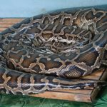 蛇の冬眠の時期の気温はどうしたらいいの?冬の蛇の飼育ケージの保温方法は?
