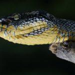蛇の目の瞳孔が縦長なのはなぜ?
