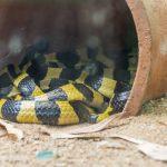 蛇が庭に巣を作った時の対策について