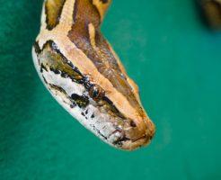 蛇 脊椎 背骨 数