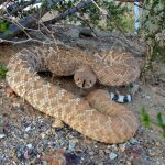 家や道でみかけた蛇。驚いたけど、これって縁起がいいの?