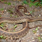 蛇にまつわるウワサ。縁起が悪いとされる由来はなに?