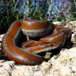 夏に蛇を飼育するには、エアコンの温度を何度にすればいい?