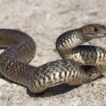 病気かな?ヘビに頻繁に現れる症状