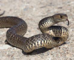 ヘビ 病気 症状 頻繁