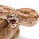 蛇の体の構造を教えて。どうして舌を出すの?牙はどうなっているの?