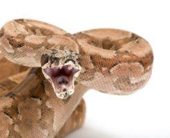 蛇 舌 体 牙 構造