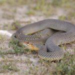 ペットの蛇。目の病気?症状をみてみよう。飼育下で気を付ける事。