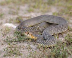 蛇 ペット 飼育 病気 目 症状