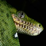 緑やオレンジの蛇はいる?どこに行けば見られる?