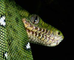 蛇 緑 オレンジ