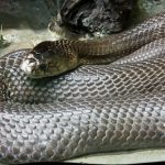 ペットにしてよい蛇の種類と値段は?