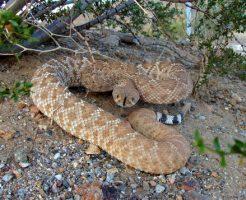 蛇 ペット 餌 ネズミ以外