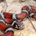 真っ赤な蛇や、茶色い蛇・・・同じ蛇に見えるけど?!