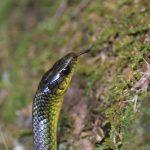 シンガポール在住&沖縄在住。黄緑色の細い蛇2種類